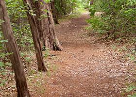 Hiking Trails in San Antonio