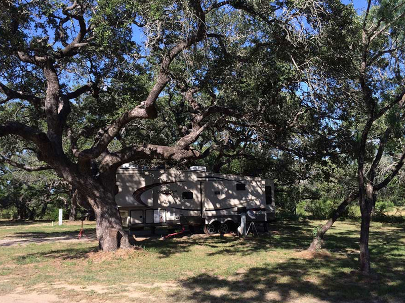 Huge Trees At Our RV Park In San Antonio
