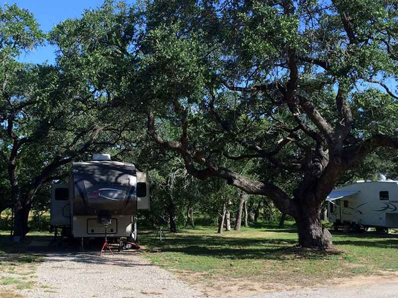Huge Trees Providing Shade At Our RV Park In San Antonio