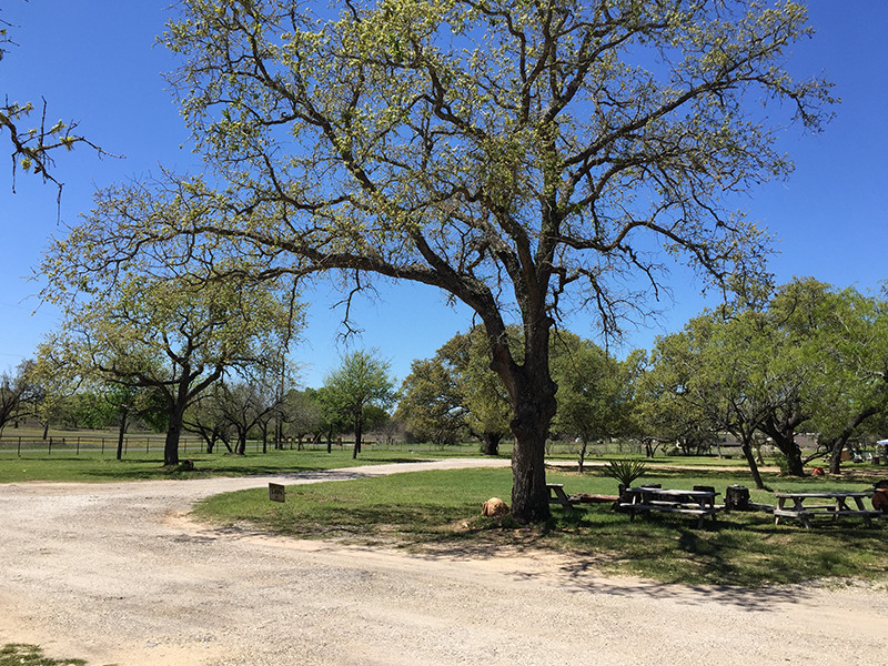 Landscaping At Our RV Park In San Antonio