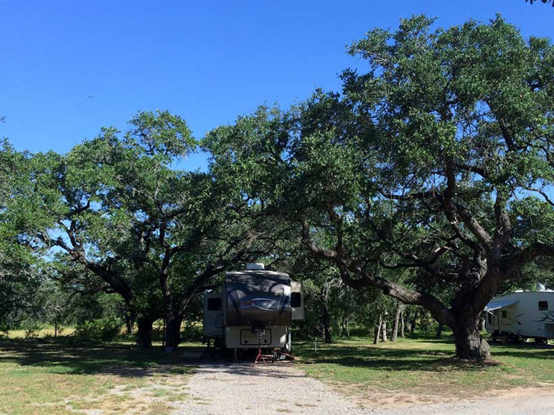 Large Trees At Our RV Park In San Antonio