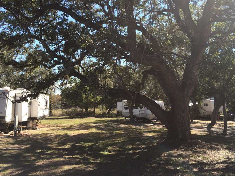 RVs Stationed Near A Large Tree At Our RV Park In San Antonio